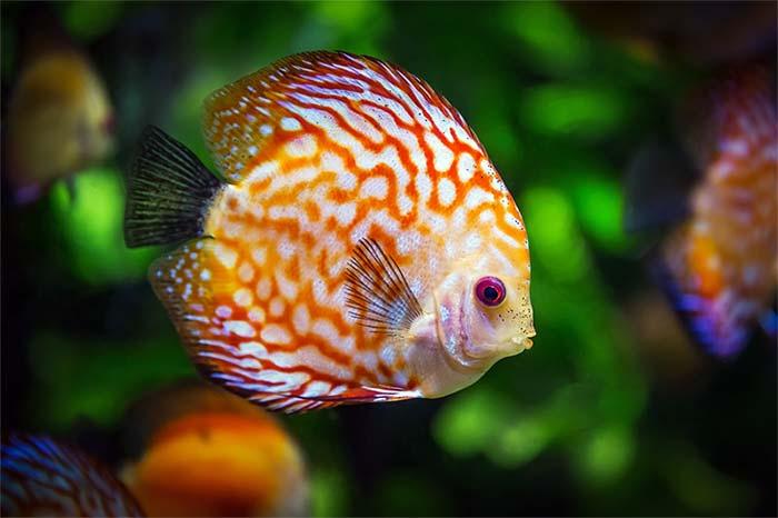 Ikan Butuh Tidur Sama Seperti Makhluk Hidup Lainnya
