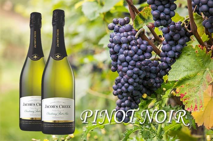Pinot Noir Pilihan Para Wine Lover